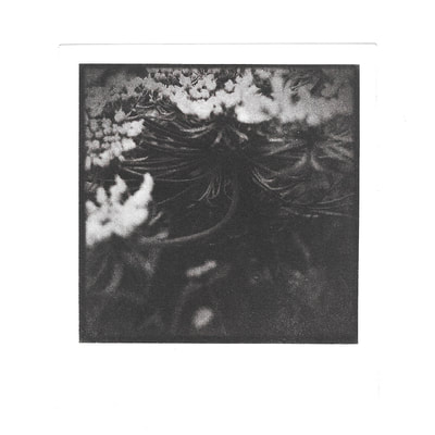 alchemical process photography flower photogravure