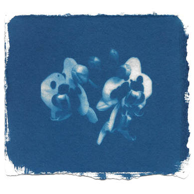 alchemical process photography cyanotype orchid