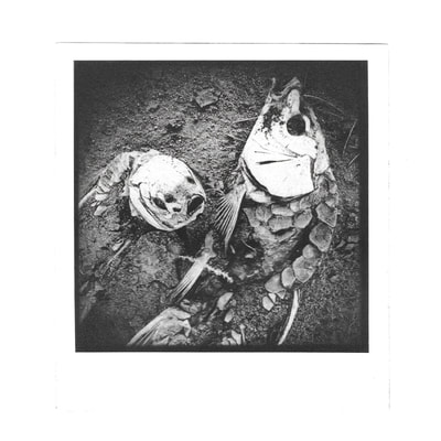 alchemical process photography fish photogravure